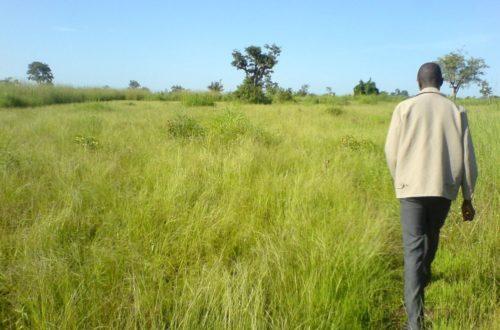 Article : Fonio: la céréale pour l'Afrique de demain