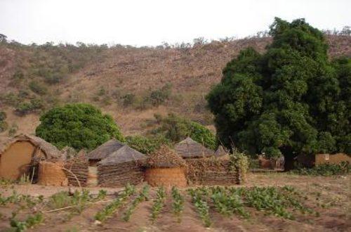 Article : Le fonio au Bénin : une spécialité de l'Atacora.